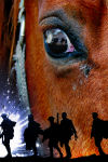 Buy tickets for War Horse tour